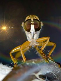 Robber Fly and Lights  by Michael Moriarty