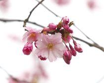 Frühlingserwachen by haike-hikes