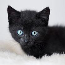 Kleine Katze / 2 von Heidi Bollich