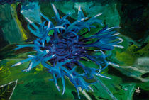 452 Berg-Flockenblume von Géza Székely