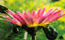 459 Exotische Blume VIII. von Géza Székely