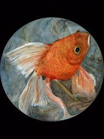 Fengshui VII - Kugelfisch von Chris Berger
