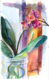 Orchid in Jar by Sarah Ferguson