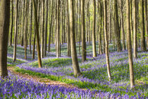 Bluebells path by Martin Beerens