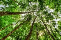 Nature Reaching For The Sky von David Pyatt