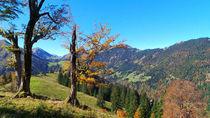 Herbst in den Bergen von Regina Müller