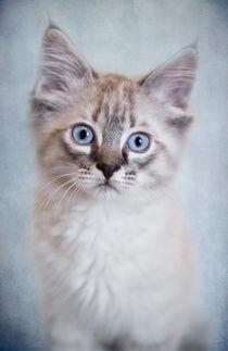 Kleine Katze / 5 von Heidi Bollich