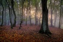 Herbstmorgen by Kai Hormann