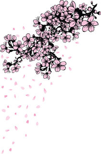 shower of falling cherry blossom petals by Cindy Shim