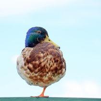 Ein-Bein-Ente von gugigei