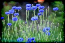 Still Life BLUE von Sandra  Vollmann