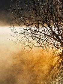 'Sonnengruß' von Beatrix Morandell