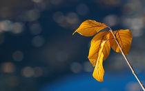 Herbstgold von Beatrix Morandell