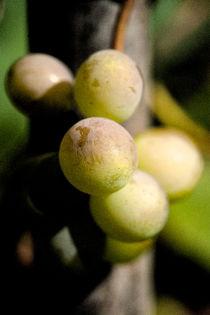 Grapes by Gaspar Avila