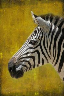 Zebraportrait by hannahhanszen