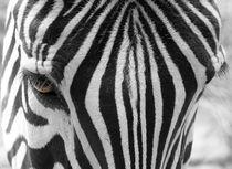 Zebrakopf by hannahhanszen
