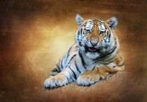 Tiger Portrait by hannahhanszen