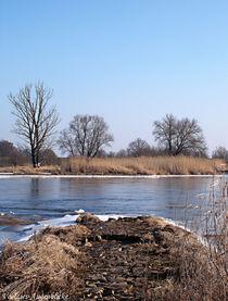 Kleine Landzunge in die Oder... von voelzis-augenblicke