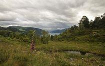 Blick über den Nordfjord von Petra Arians