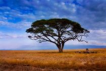Umbrella Akazie vorm Kilimandscharo by Viktor Peschel