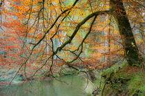 Begrabt mein Herz an der Biegung des Flusses by Thomas Matzl