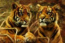 Sumatran Tiger Cubs by Trudi Simmonds