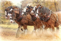 Clydesdales in Harness von Trudi Simmonds