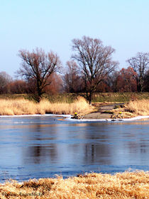 Klarer Wintertag an der Oder by voelzis-augenblicke