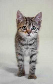 Kleine Katze / 6 von Heidi Bollich