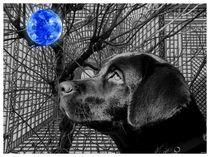 Dog and Blue Orb by Lance Rann
