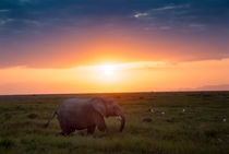 Afrikas Abendsonne - Kenia von Viktor Peschel