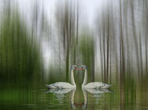 Swan Lake spring von Chris Berger