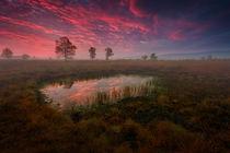 Ein Morgen im Herbst von Kai Hormann