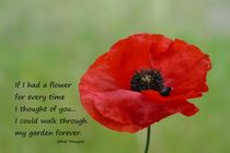 Remembrance Poppy  by Barbara St. Jean