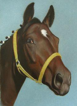 Pferdeportrait-lara