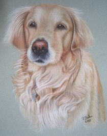 Golden Retriever Gina by Peter Bahn