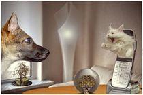 Seit wir diesen neuen Klingelton eingestellt haben, benimmt sich unser Hund so komisch :-) von Petra Arians