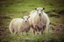 Schafe by Doreen Reichmann