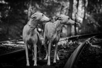 Whippets - Auf Reisen by Chris Berger