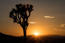 Sunset, Joshua Tree National Park, California, USA by geoland