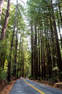 Strasse durch den Henry Cowell Redwoods State Park, Falls Creek Unit, Kalifornien, USA von geoland
