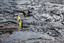 Zartes Pflänzchen von geoland
