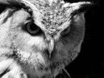 Owl BW by Huanita Zimmermann