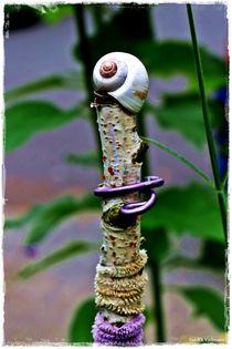 Nature Art 2 von Sandra  Vollmann