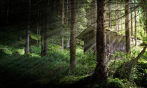 Waldhütte von photoart-hartmann