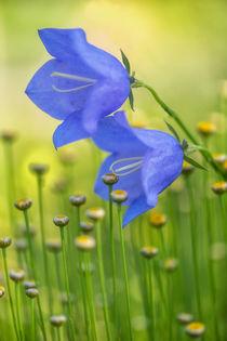 Flowers 6735 von Mario Fichtner