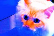 Cat von Paula Carvalho