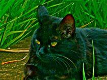 Black cat von Paula Carvalho
