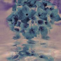 Hortensienspiegel - blau pastell by Chris Berger