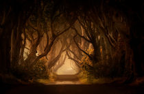 Sunny morning in Dark Hedges by Jarek Blaminsky